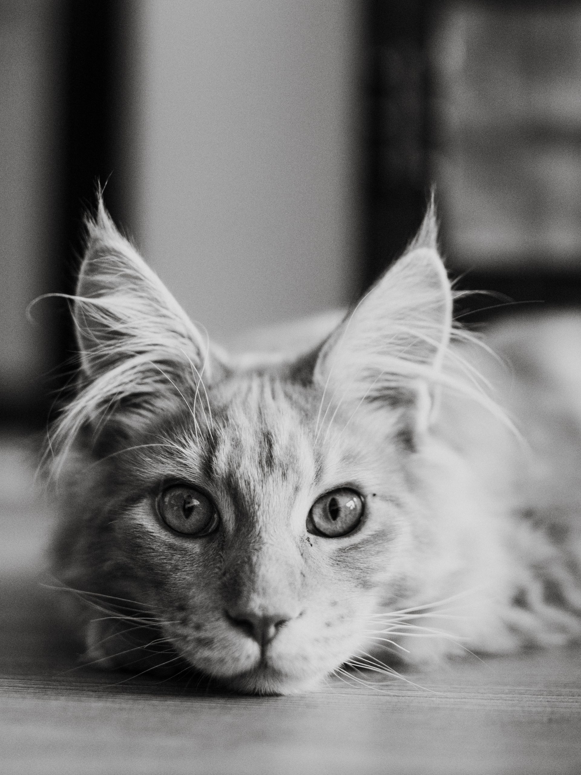portret fotografie from Mathilda